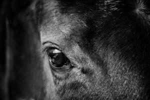 Das Auge - Der Blick in die Seele