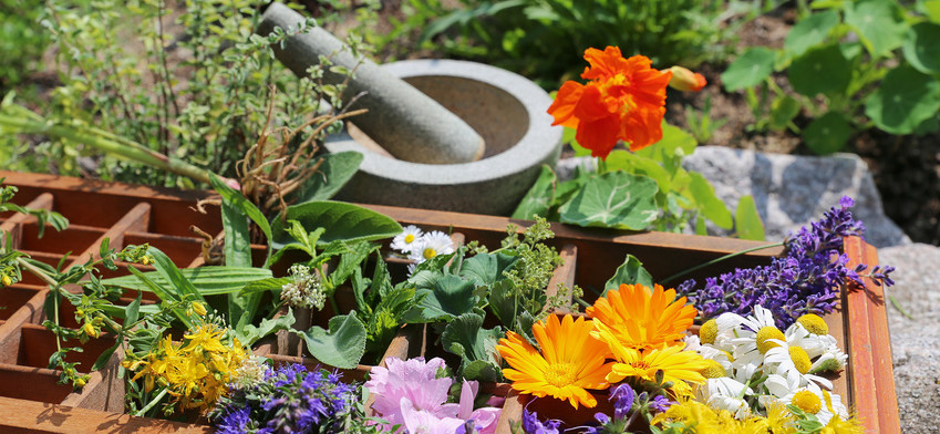 Heilpflanzen aus dem Garten